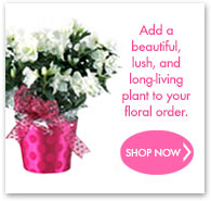 Add a beautiful, lush, and long-living plant to your floral order.